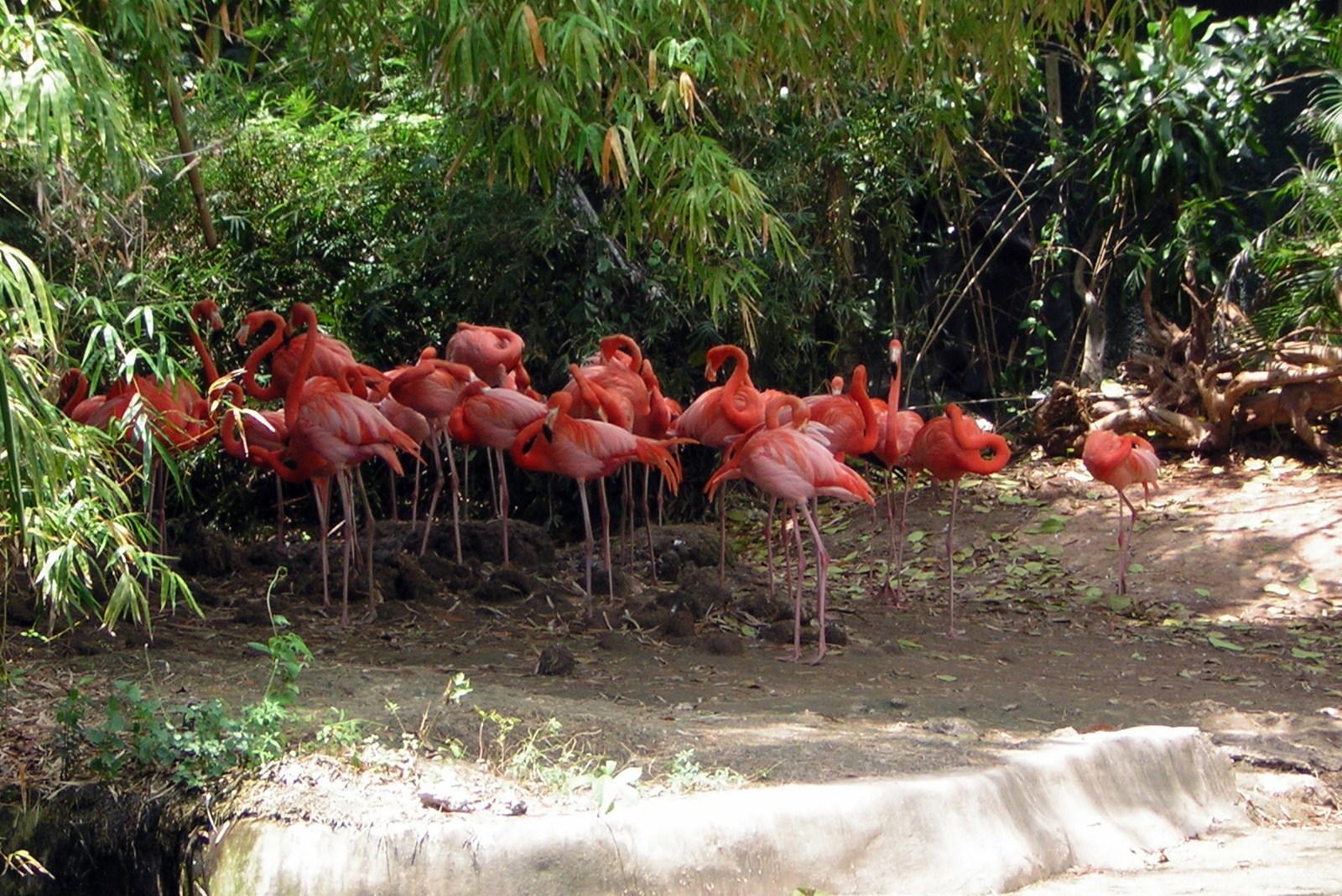 Экскурсии в Пунта-Кане