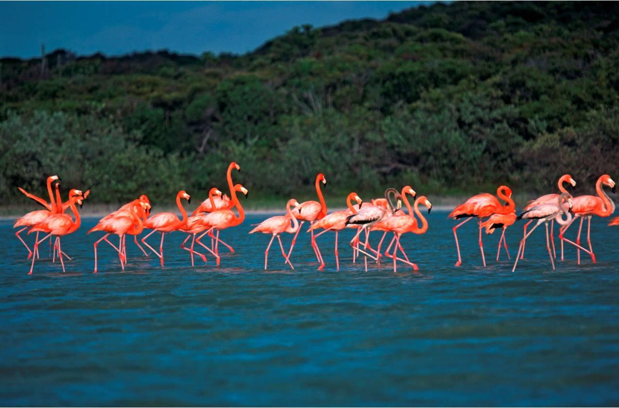 Фото национального парка Харагуа