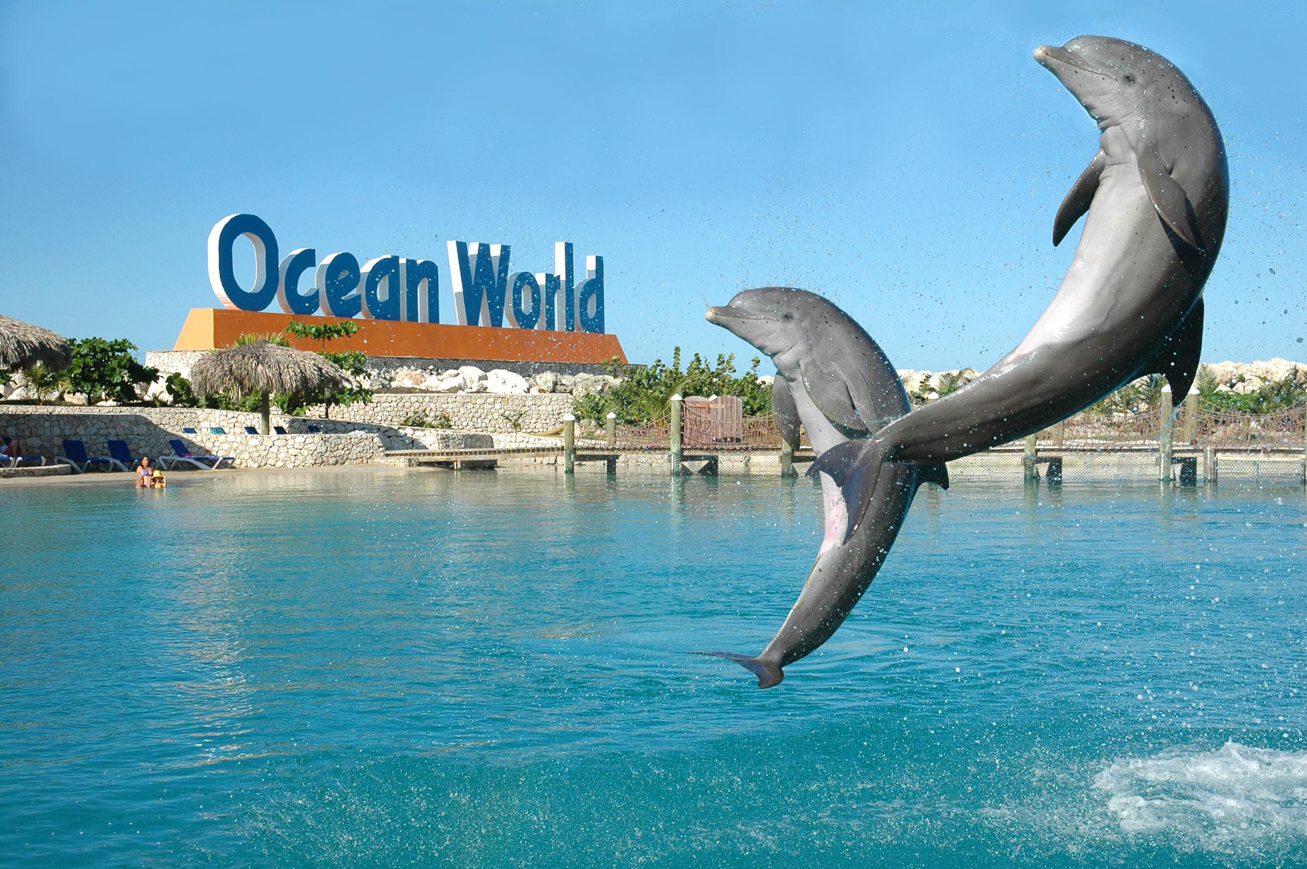 Фото парка Ocean World