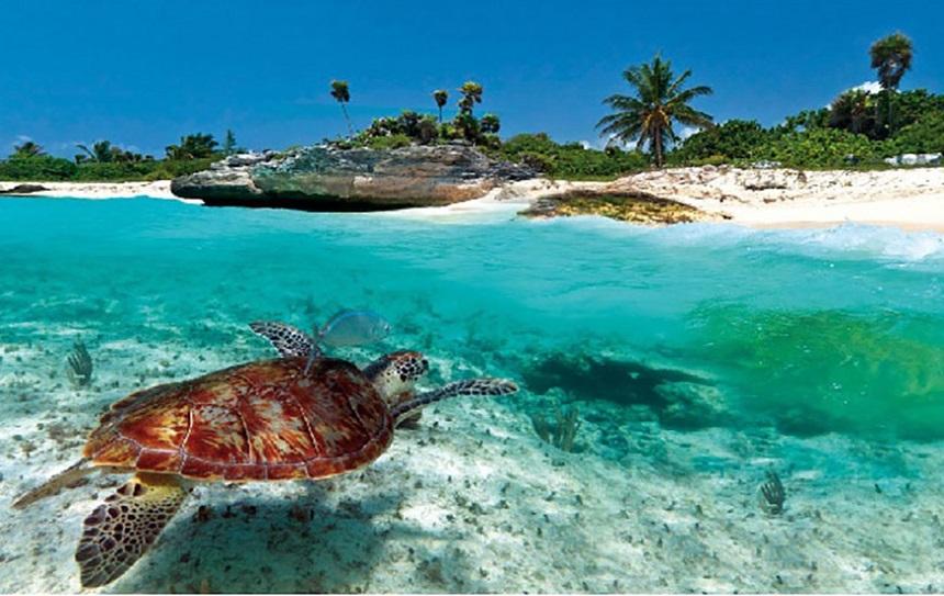 ТОП-20 лучших экскурсий Доминиканы остров Саона