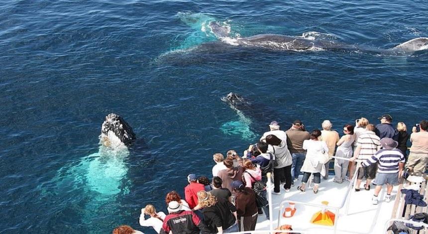 Наблюдение за китами полуострова Самана