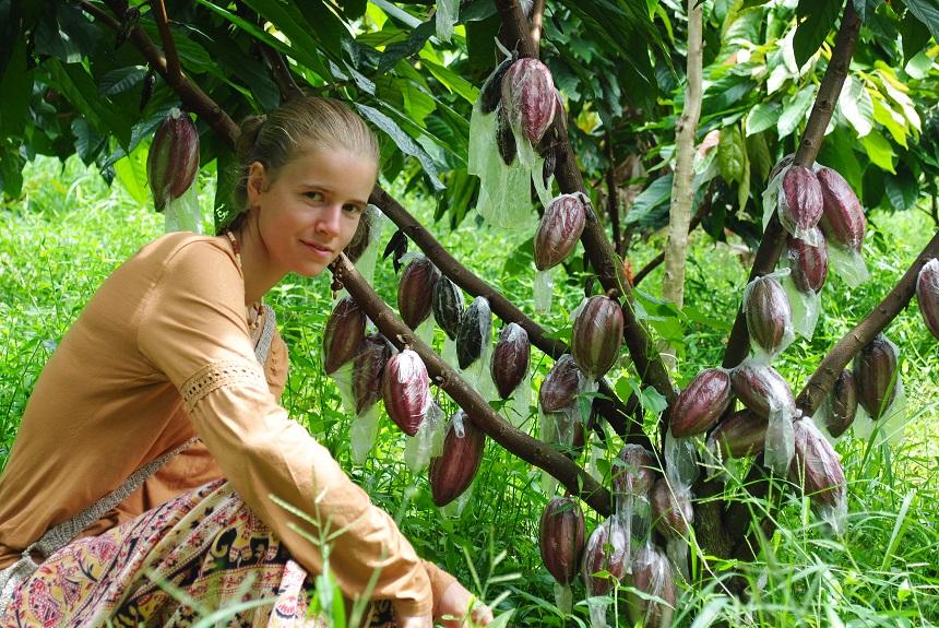 Какао на Доминикане