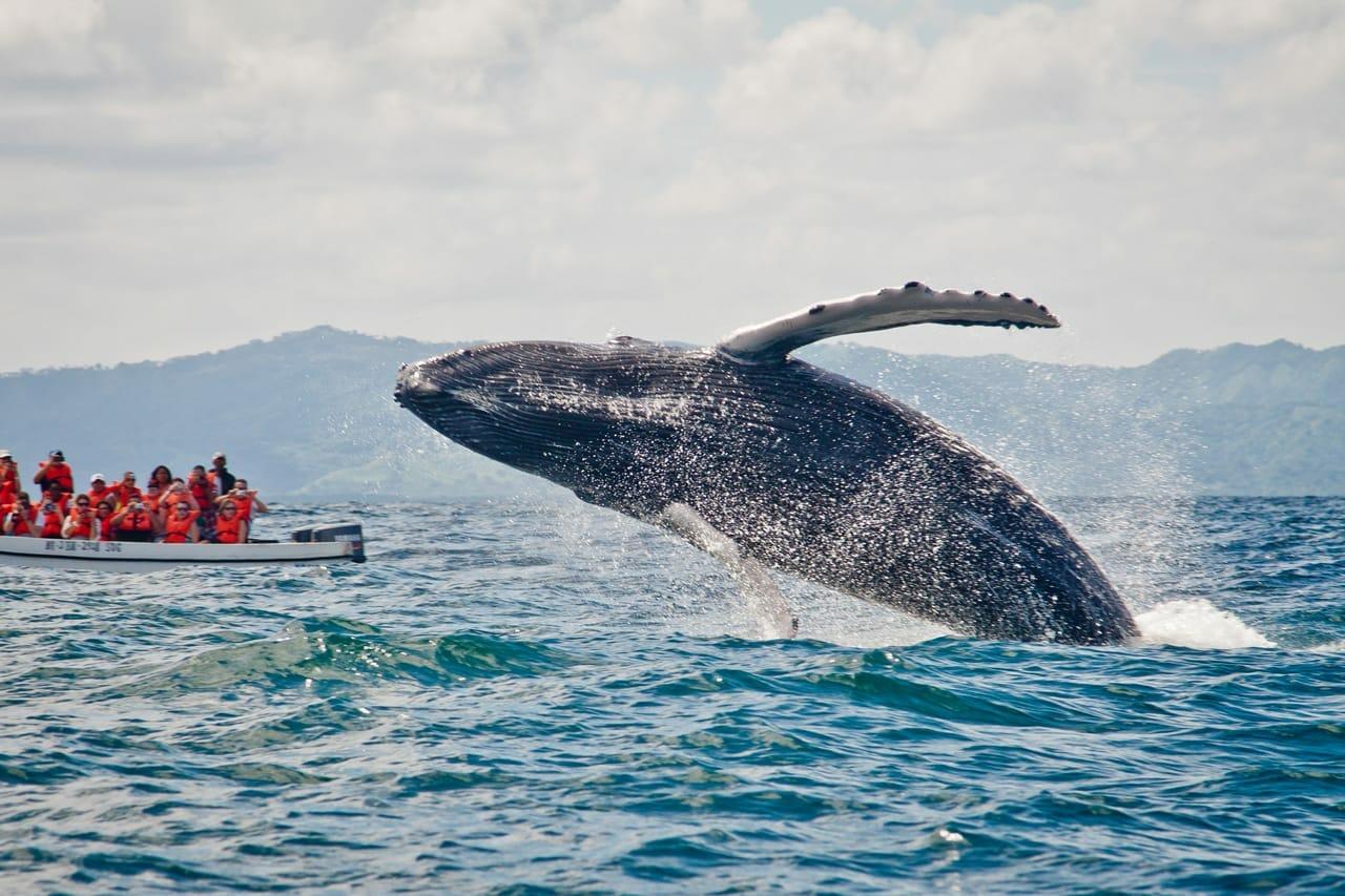 Фото кита в Доминикане