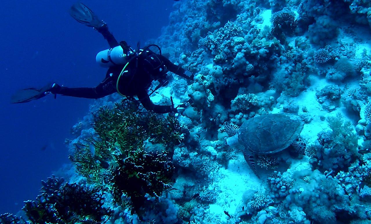Морские погружения и «охота» в Доминикане