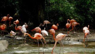 Животные в Доминикане