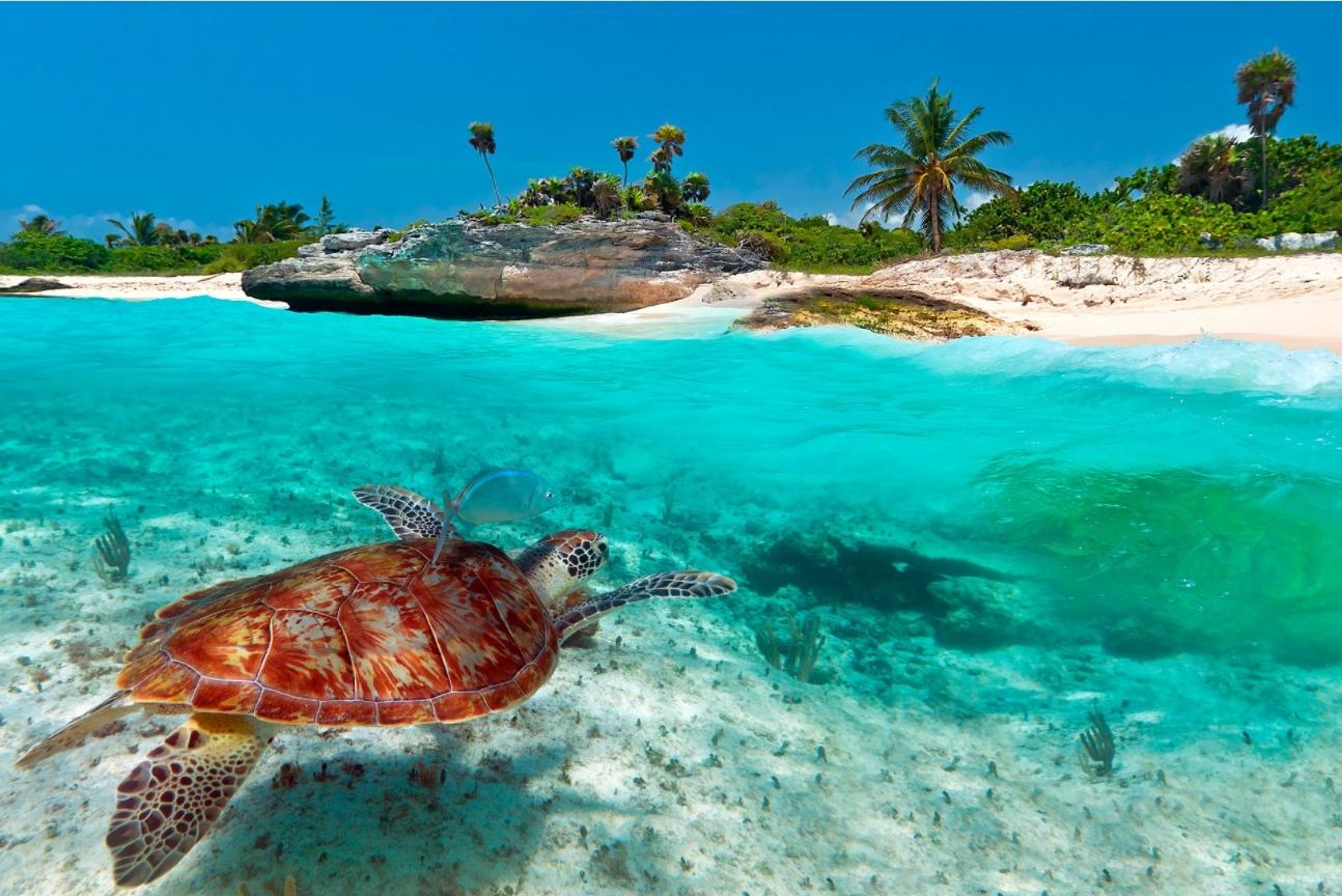 Доминиканские черепахи