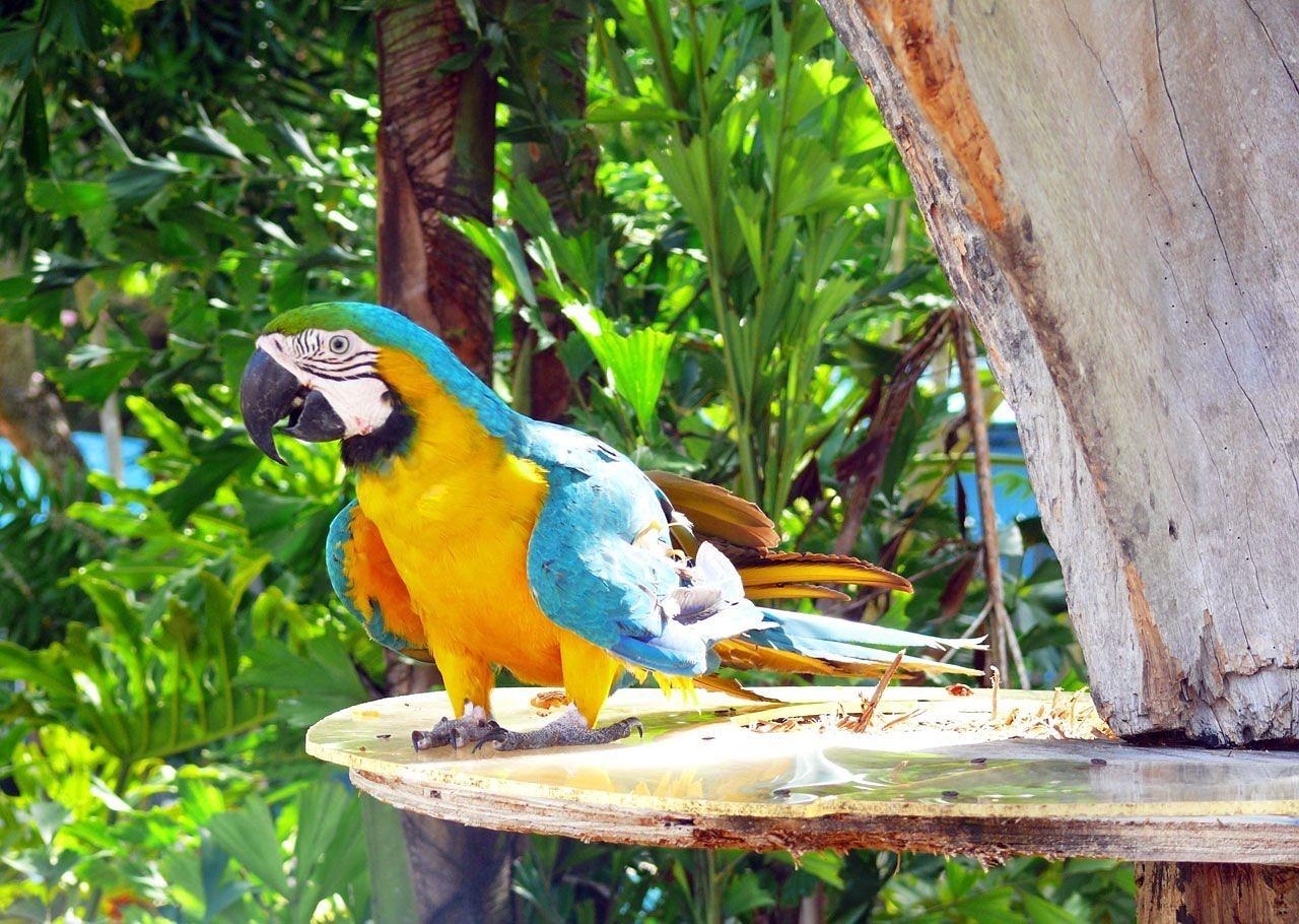 Попугаи в Доминикане