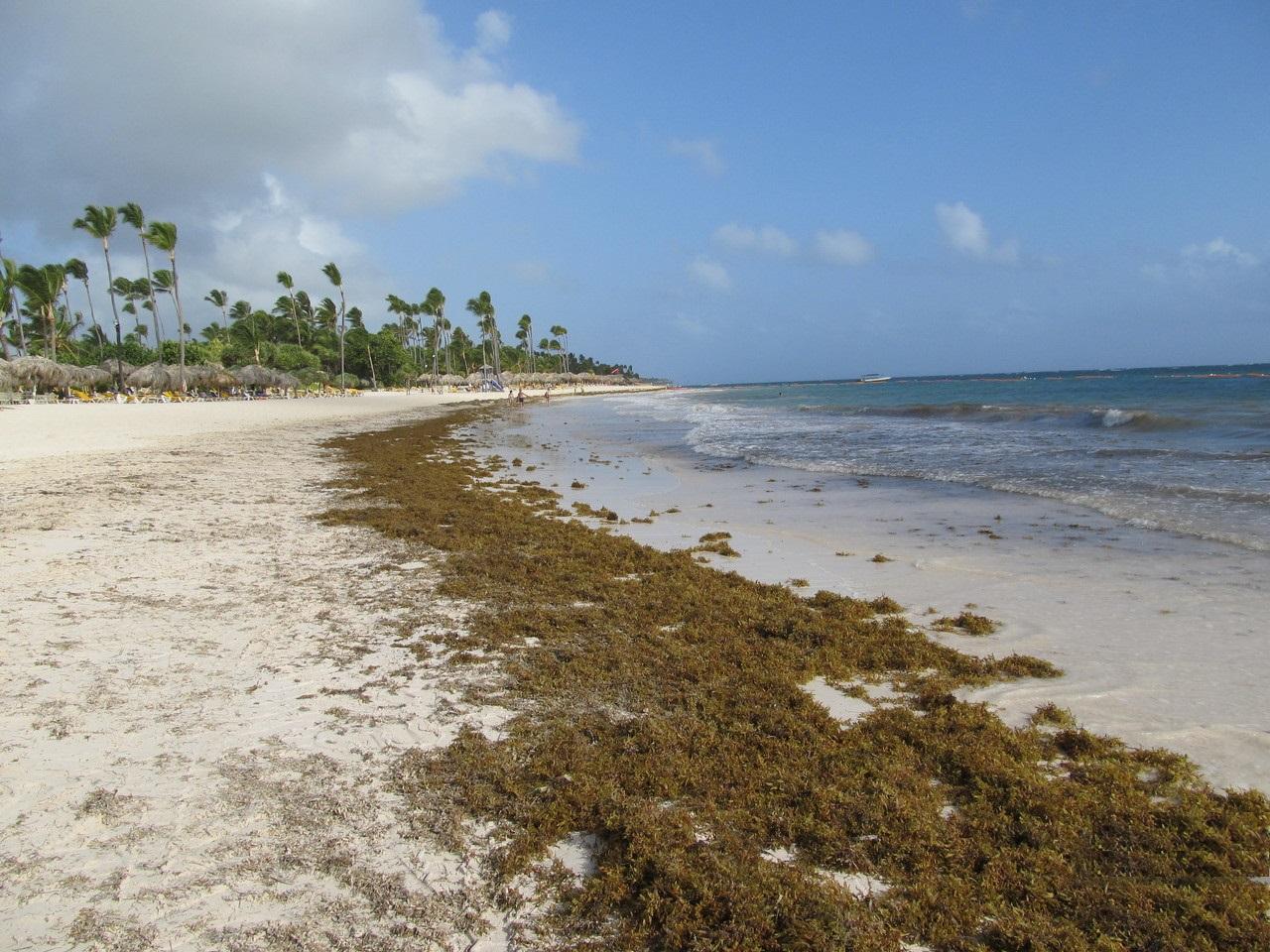 Что нужно знать о водорослях на пляжах Доминиканы