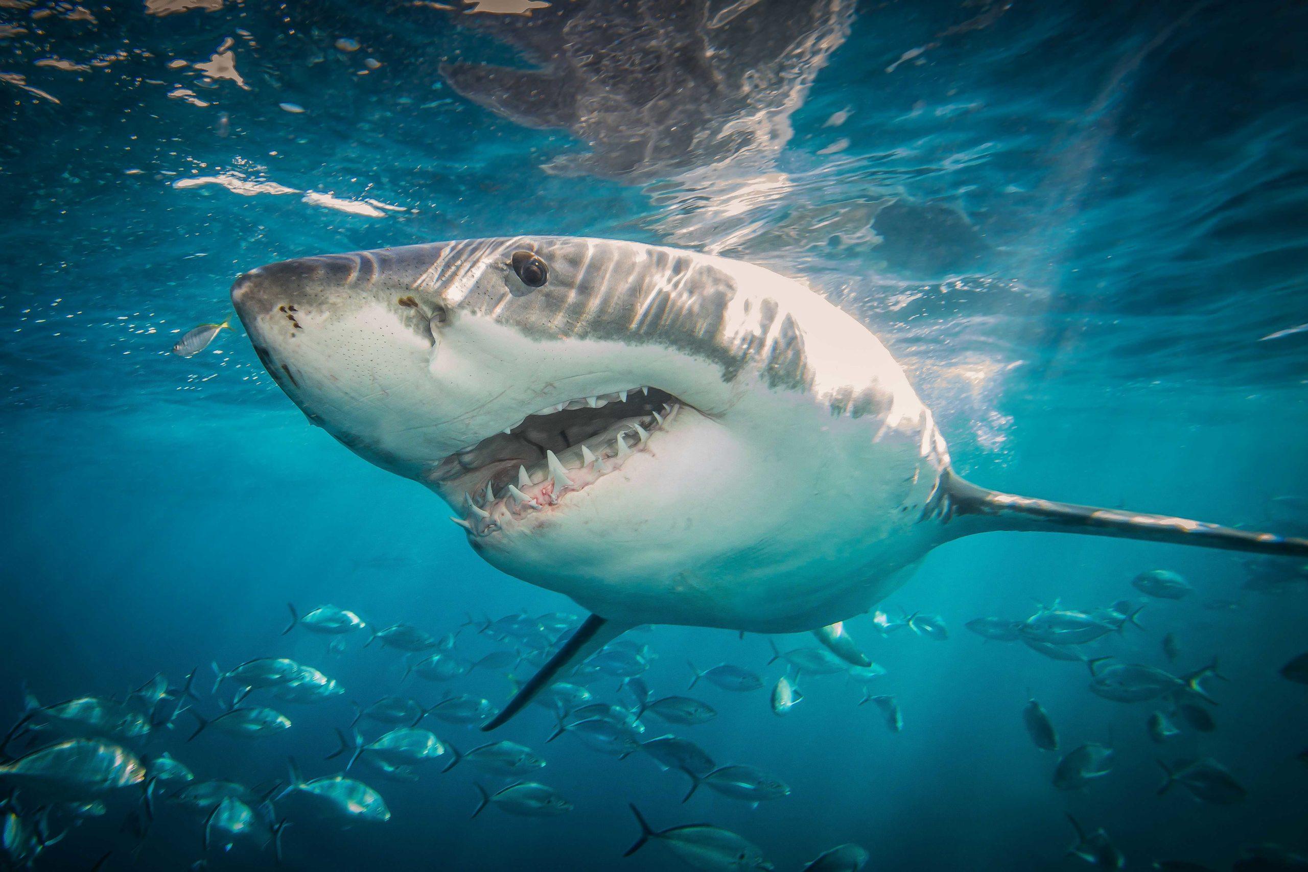 Какие виды акул водятся у берегов