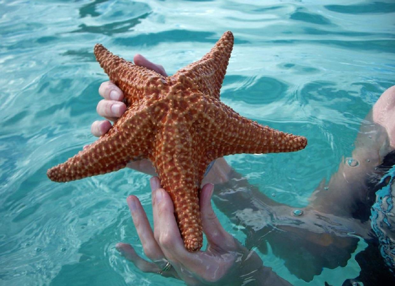 Фото морской звезды