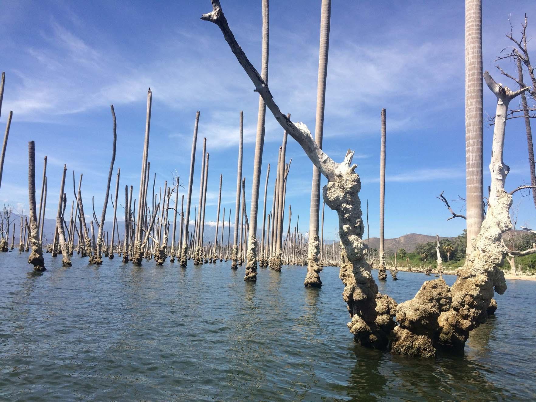 Фото деревьев в озере
