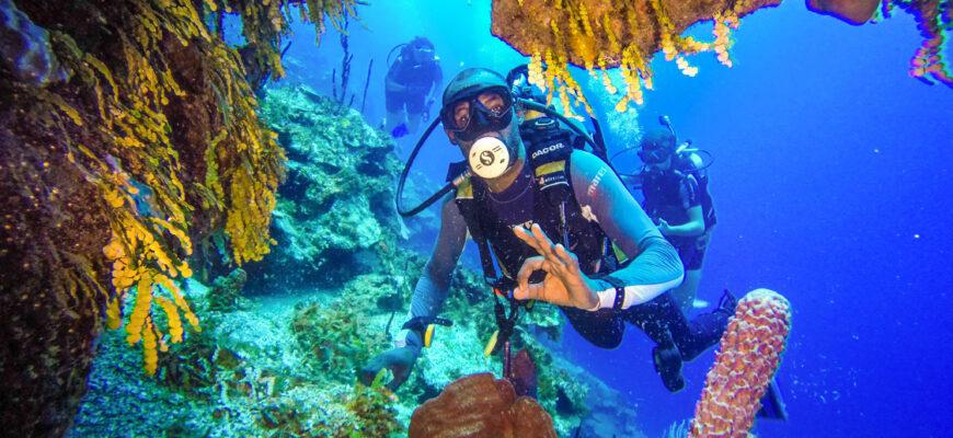 Фото подводного мира Доминиканы