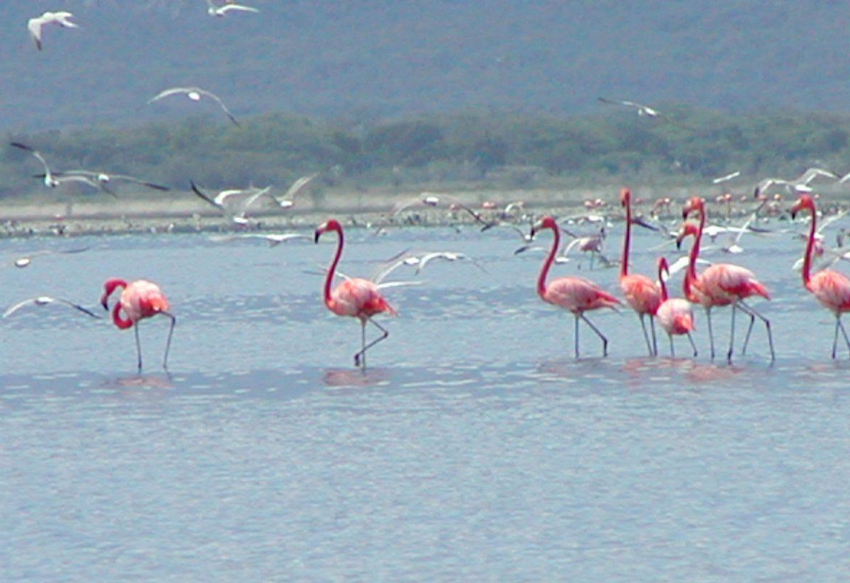 Фото красных фламинго на озере