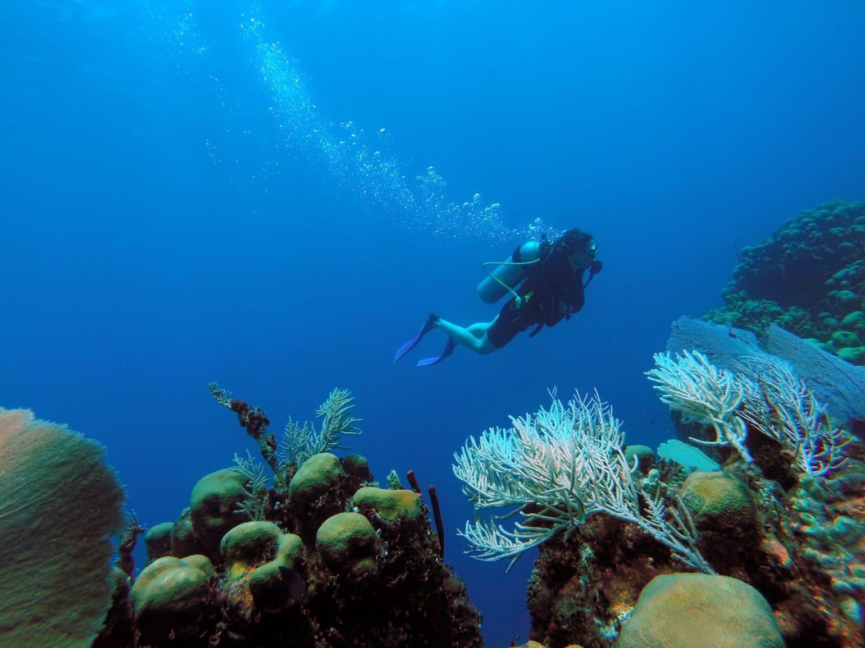 Фото дайвинга у северного побережья Доминиканы