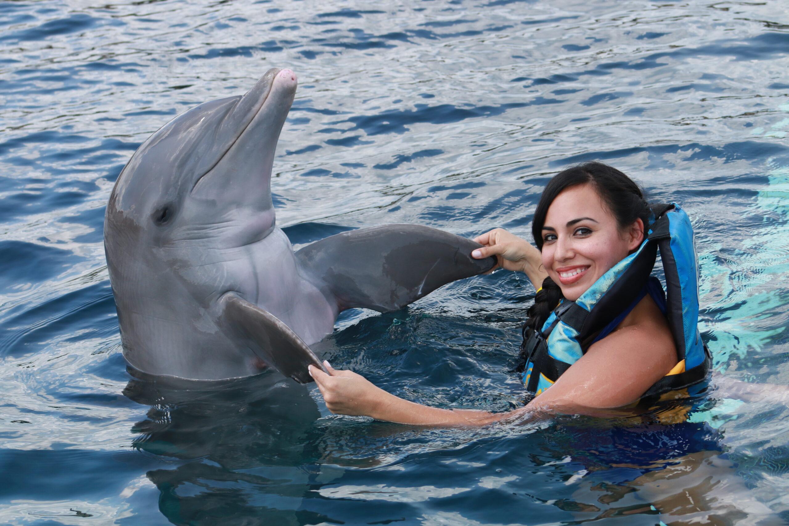 Фото дельфина в парке