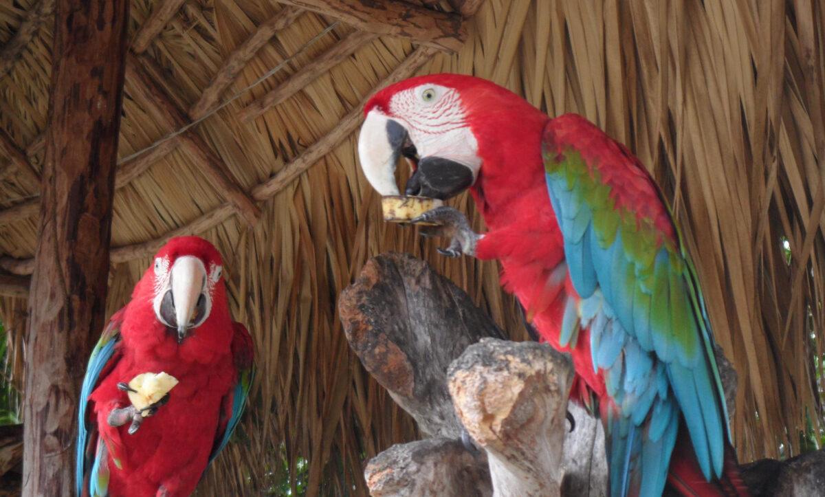 Фото попугаев в парке